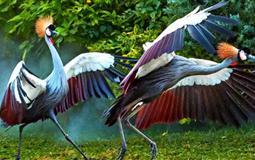 长隆野生动物园+海洋王国+飞鸟乐园双动双飞3/4日游<D3双隆记奇趣童真>