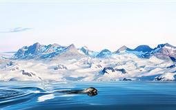 [海钻石号]南极<极地半岛+南设得兰群岛>+阿根廷深度15日游<上海起止>