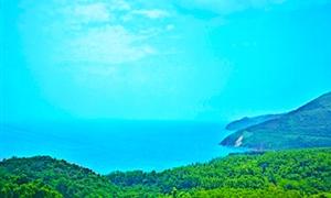 山茶半岛2