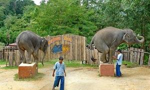 金娜丽大象公园3