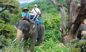 金娜丽大象公园5