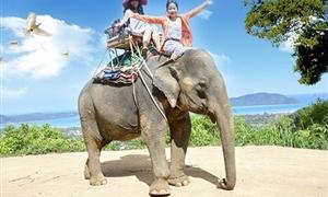 金娜丽大象公园4