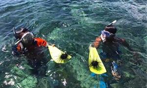 民丹岛潜水