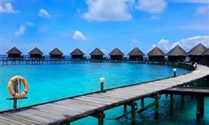 蓝色美人蕉岛2