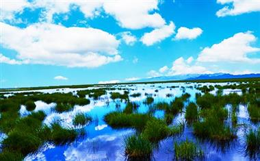 若尔盖花湖-1