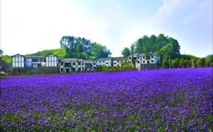 南川浪漫香草园、大观珍奇药用植物园一日游 夏季漂流季