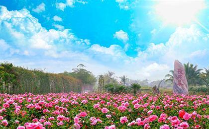 三亚分界洲岛-香水湾-天涯海角-玫瑰谷双飞6日游<一价全包>万豪假期