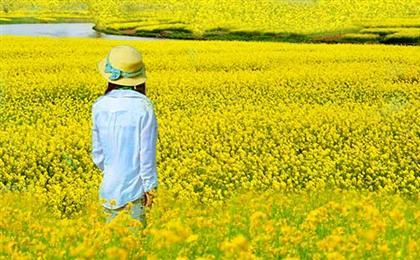 【团队定制】潼南油菜花基地、双江古镇1日游可以根据您的要求,制定行程