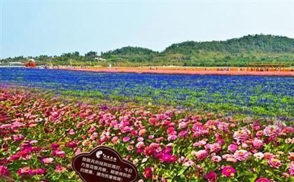 璧山凤凰花海、湿地公园、秀湖一日游赏花季