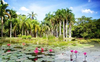 云南西双版纳勐仑植物园-野象谷-原始森林公园双飞5日游万达假日