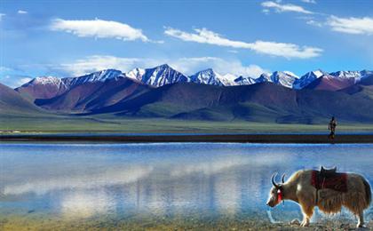 西藏拉萨-林芝-羊湖-纳木错卧进飞回10日游精品旅游