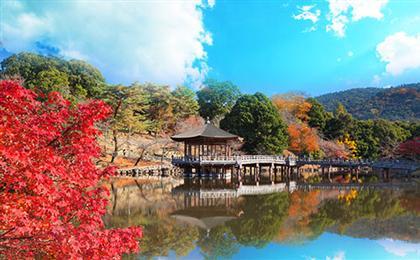 日本东京+富士山+奈良+京都+大阪7日游<国航直飞+全程0自费>东瀛和枫·本州全景