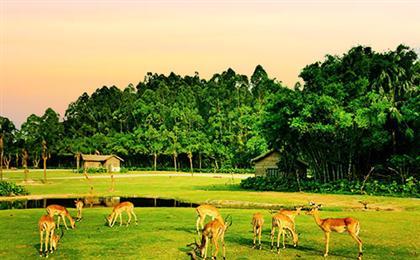长隆野生动物园+欢乐世界+飞鸟乐园双动双飞3/4日游<D2长隆-奇趣童真>亚洲大型野生动物主题公园,世界主题亲子乐园,爸爸去哪儿电影拍摄基地,与兽同乐。