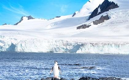[海钻石号]南极<极地半岛+南设得兰群岛>+巴西+阿根廷深度21日游<上海起止>极圈穿越+极地探险,高级游轮冰级探险船+专业极地团队随团,有机会访问中国长城站