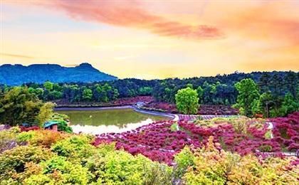 巴南南湖多彩植物園直通車一日游<重慶周邊一日游>重慶周邊一日游,多彩植物園+馬桑溪古鎮