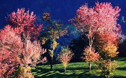 大理洱海-南涧无量山樱花谷精品小包团双飞五日游浪漫冬樱