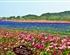 璧山凤凰花海、湿地公园、秀湖一日游