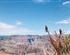 [一价全含]美国西海岸(旧金山+17英里)+大峡谷+双乐园+名校10日游<美国乐园畅游>